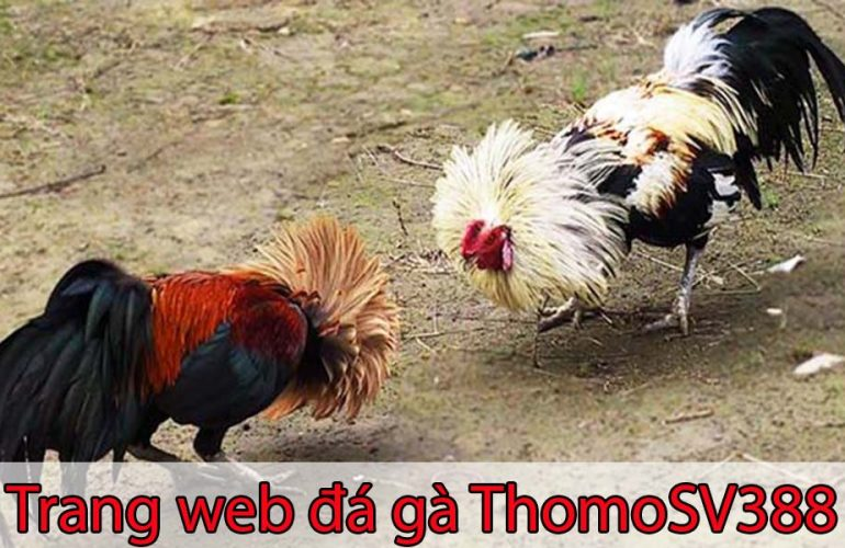 Giới thiệu đá gà ThomoSV388