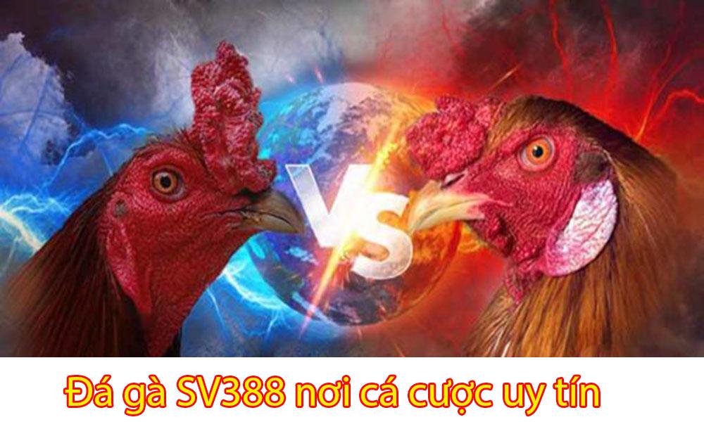 Đá gà SV388 nơi cá cược uy tín, chất lượng nhất