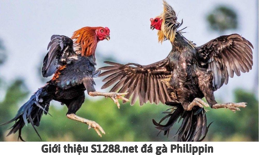 Giới thiệu S1288.net đá gà Philippin