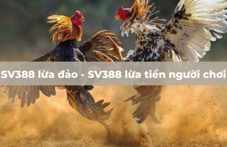 Nhà cái SV388 tổ chức đá gà bịp